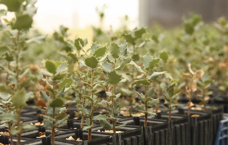 GESFORMA dona 434.000 árboles contra el cambio climático
